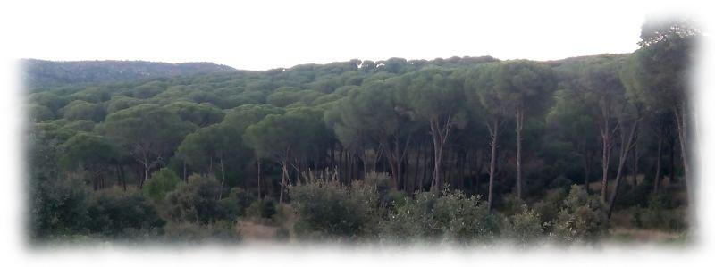 El pinar de Almorox